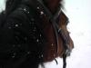 count-in-de-sneeuw